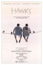 Jestřábi (Hawks)