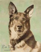 Rin Tin Tin (pes)