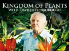Království rostlin