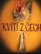 Kvítí z Čech