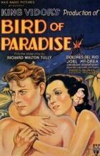 Rajské ptáče (Bird of Paradise)