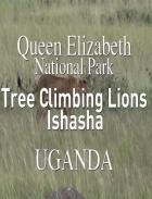 Lvi na stromech (Tree Climbing Lions)