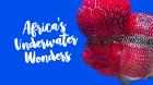 Podmořské divy Afriky (Africa's Underwater Wonders)