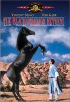 Návrat černého hřebce (The Black Stallion Returns)