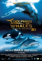Delfíni a velryby 3D: tuláci oceánů