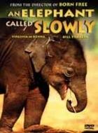 Obklíčení slony (An Elephant Called Slowly)
