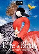 Ptačí svět