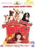 TV program: Pozor, hodný pes (Good Boy!)