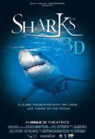Žraloci 3D (Sharks 3D)