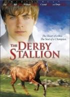 TV program: Vítězný hřebec (The Derby Stallion)