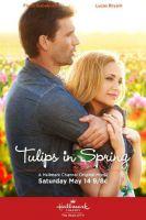 TV program: Tulipány pro Rose (Tulips for Rose)