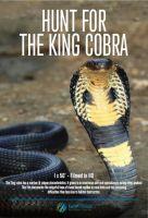 Hledání kobry královské (Secrets of the King Cobra)