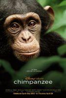 TV program: Šimpanzi (Chimpanzee)