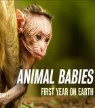 TV program: Mláďata – první rok na světě (Animal Babies: First Year on Earth)