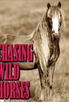 TV program: Stíhání divokých koní (Chasing Wild Horses)
