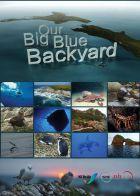 Podmořské poklady Nového Zélandu (Our Big Blue Backyard)